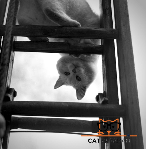white cat playing outside on a cat ladder