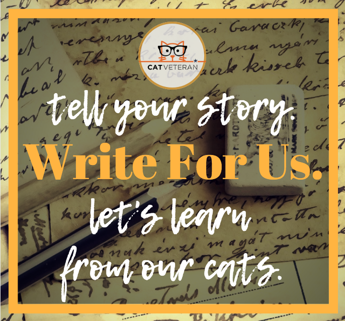 write for us and become part of the cat veteran family