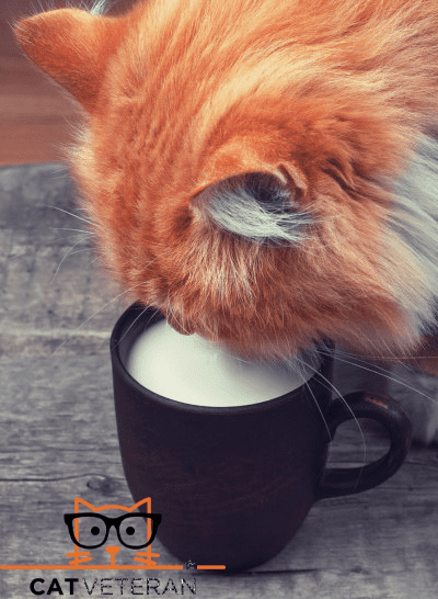 Ginger cat drinking milk from a cup