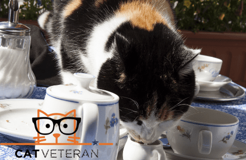 calico cat drinking milk from a tea cup