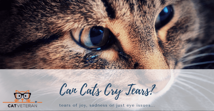 can cats cry tears opt