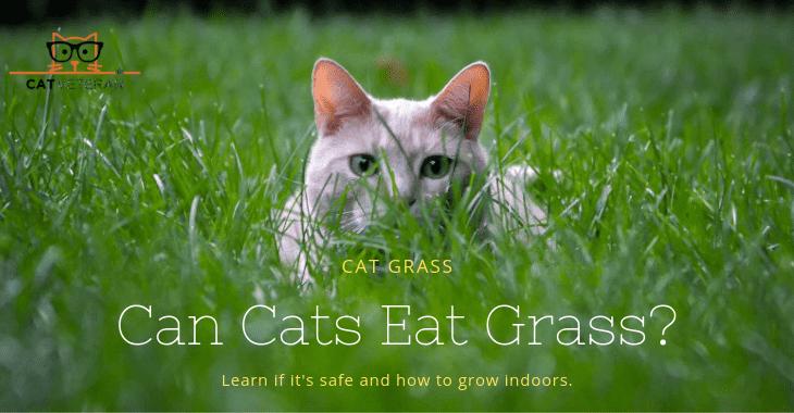 can cats eat cat grass