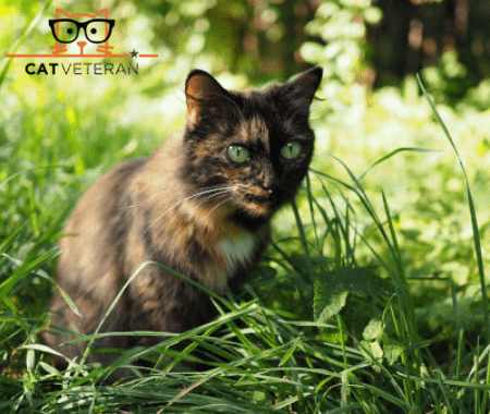 dark calico cat sitting in grass outside
