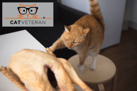 red tabby cat on stool trying to grab a raw whole chicken to eat