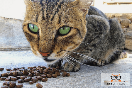 calico cat eating dry food outside on concrete floor cat eats too much