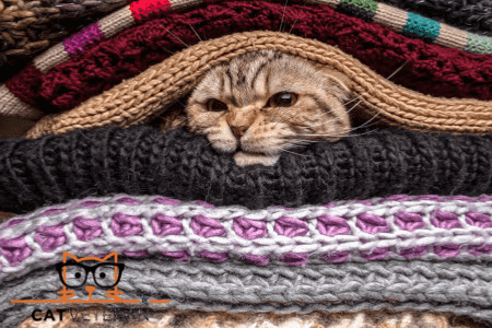 cat in between pile of woolen clothes not wanting to eat