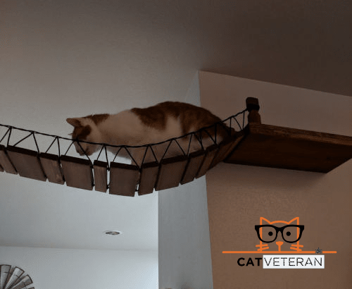 foo foo on the custom cat bridge