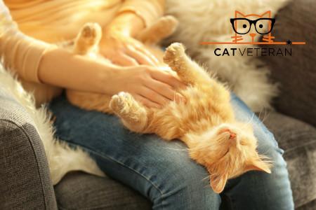 cat sleeping on my knees