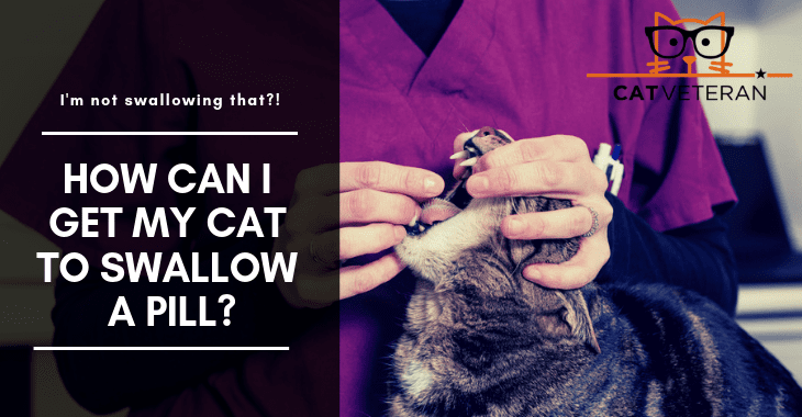 How Can I Get My Cat To Swallow A Pill