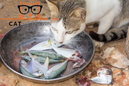 calico cat eating tuna and fish from a metal bowl outside