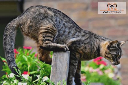 cat hunting in garden cat veteran