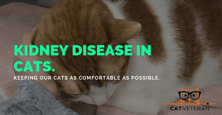 Kidney Disease In Cats Stages Symptoms Coping Unique Healing