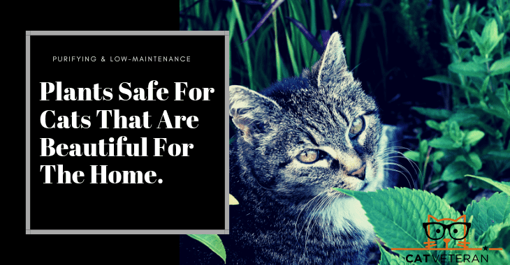 plants safe for cats