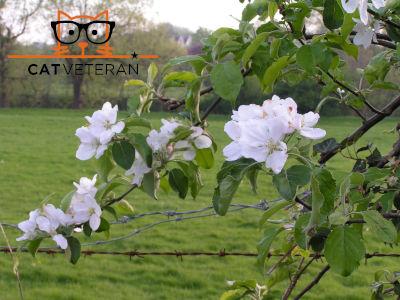 primrose white