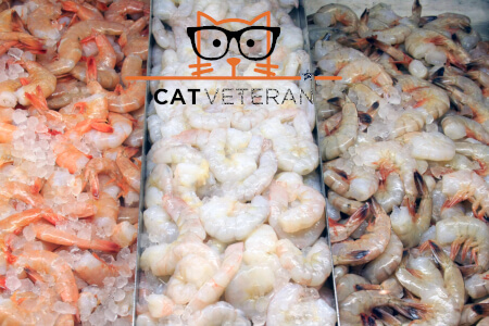 variety of shrimp for cats to eat