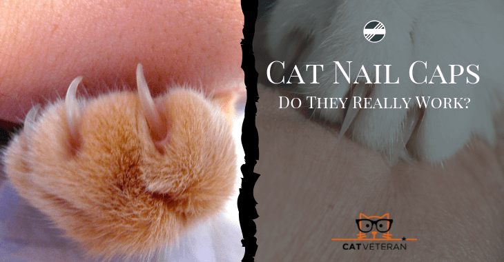 Do Cat Nail Caps Really Work