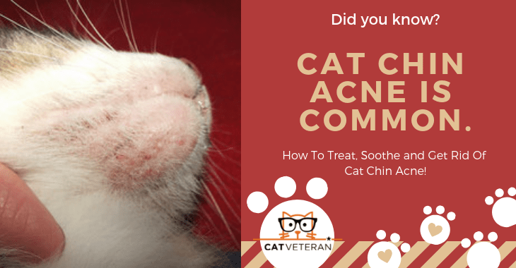 how do you treat cat chin acne