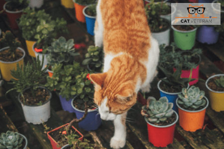 what causes dermatitis in cats