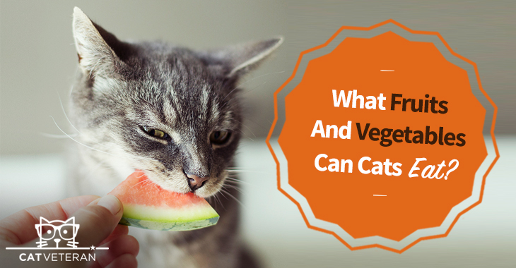 what fruits and vegetables can cats eat