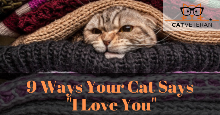 ways your cat says I love you