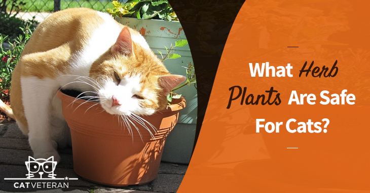 what herb plants are safe for cats